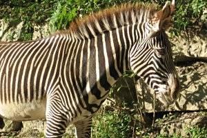 Zoo Kaiserslautern, copyright: Diana