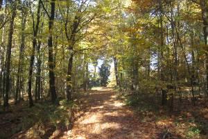 Waldweg (c) alex grom