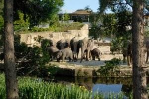 Kindergeburtstag bei den Tieren im Kölner Zoo feiern (c) Zoo Köln