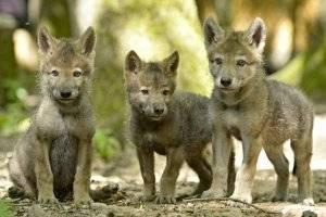 (c) Wolfspark Werner Freund