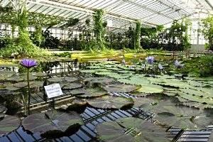 botanischer garten m nchen nymphenburg mamilade ausflugsziele. Black Bedroom Furniture Sets. Home Design Ideas