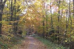 Kinderwagenfreundliche Wanderwege im Münstertal (c) al grom