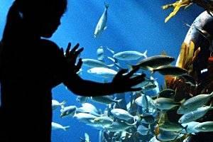 Sea Life Oberhausen, copyright: Sea Life