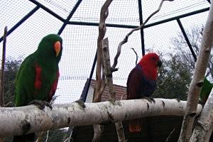 Papageien © Vogelpark mit Streichelzoo Teltow