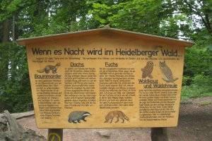 Walderlebnispfad in Heidelberg (c) alex grom