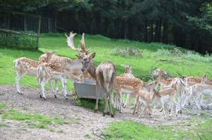 Wildpark (c) Gemeinde Haibach