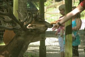 (c) Wildpark Donsbach