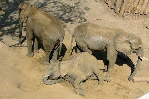 (c) Zoo Halle