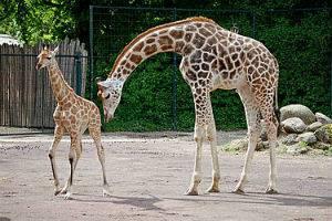 (c) Zoo Magdeburg