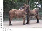 Kindergeburtstag im Tierpark in Neumünster