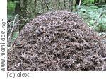 Ameisenlehrpfad bei Engstingen