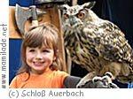 Schloß Auerbach - Erlebnisfalknerei