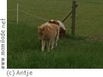 Haustierpark in Werdum