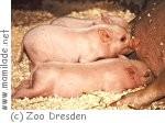 Zootag im Zoo Dresden