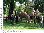 Sommertheater im Zoo Dresden