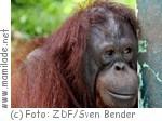 Deutsche Kinemathek Berlin - Im Dschungel