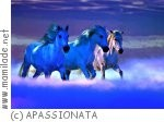 APASSIONATA - Bis ans Ende der Welt