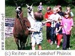 Lamahof Phönix Kinderstunde