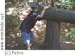 Wald-Erlebnispfad Eversberg
