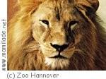 Zoo Hannover Sambesi ü