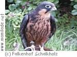 Falkenhof Schalkholz
