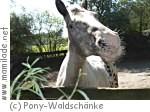 Pony-Waldschänke in Hamburg