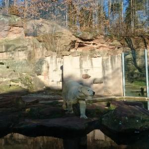 Mami-Check: Tiergarten Nürnberg
