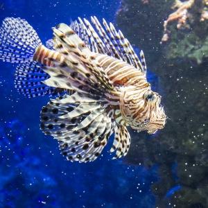 Tropen-Aquarium