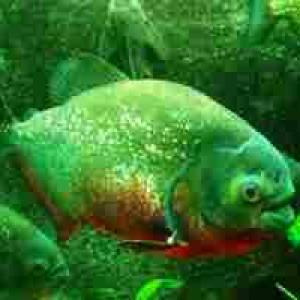 (c) Aquarium Erfurt