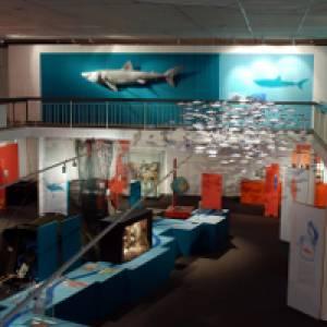 """Einblick in die Sonderausstellung """"Mensch, Fisch!""""  im Landesmuseum Natur und Mensch in Oldenburg"""