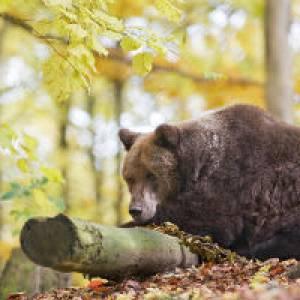 Bärenpark in Worbis