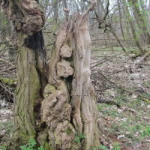 Erlebniswelt Naturstoff Holz  in Baruth