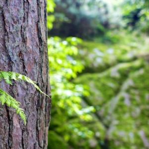 Symbolfoto Baumerlebnispfad im Menke Park Oberneuland