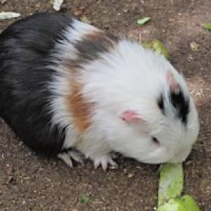 Tiere erleben auf der Knirpsenfarm in Berlin