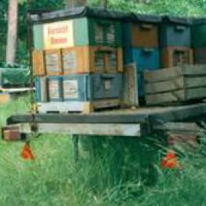 Bienenmuseum in Märkisch Luch