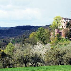 Burg & Burgpark Gamburg