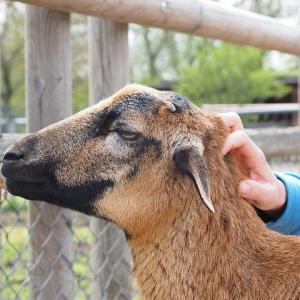 Der Haustierpark in Werdum