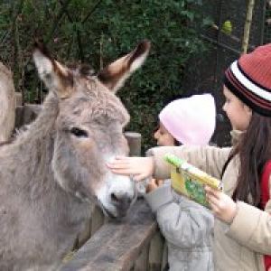 Kindergeburtstag Duisburg Zoo