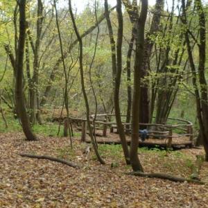 Feensteig Weberstedt im Nationalpark Hainich