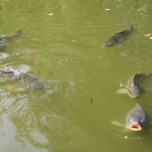 Fischlehrpfad in Waldkirch (c) alex grom