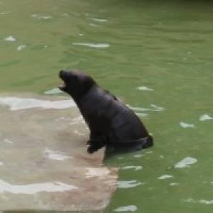 Fahrt zu den Seehundsbänken vor Föhr (c) alex grom