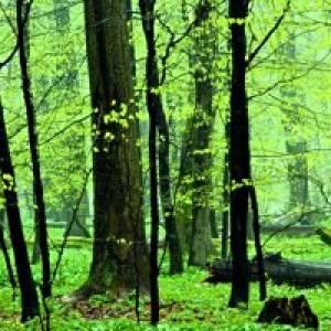 Naturpfad Thiemsburg im Nationalpark Hainich