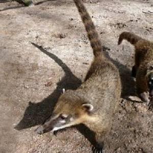 Tierbeobachtungen im Tierpark in Herford