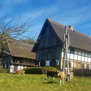 Höllberghof in Heideblick