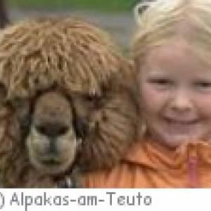 Gute Freunde beim Alpaka-Trekking