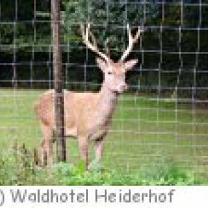 Waldhotel Heiderhof in Obersteinebach
