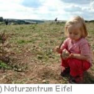 Fossilienacker im Naturzentrum Eifel