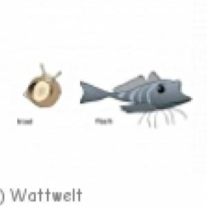 Wattwelt