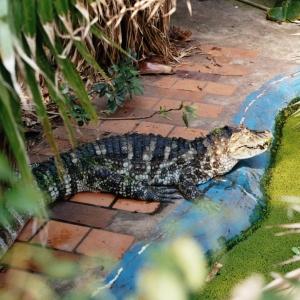 Krokodilstation Golzow