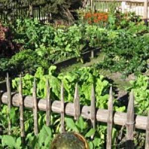 Bauerngarten Jonsdorf